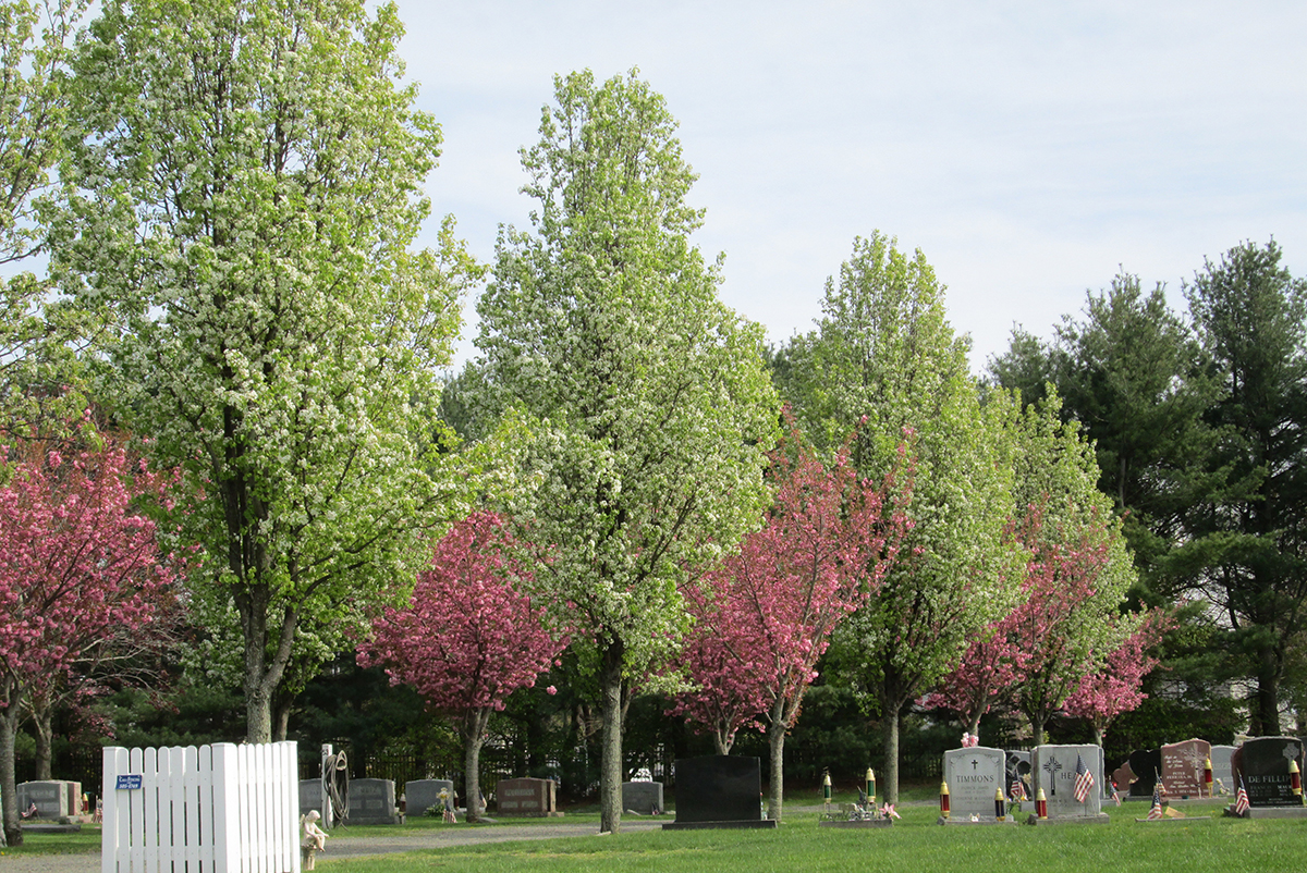 St. Joseph's Catholic Cemetery and Mausoleums